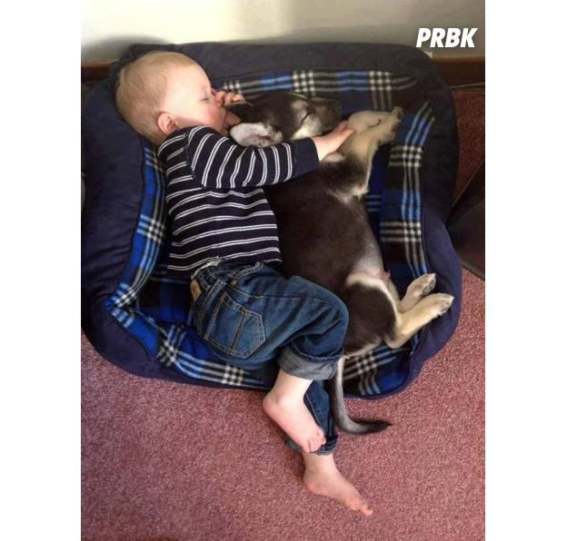 Bébé avec animal 03