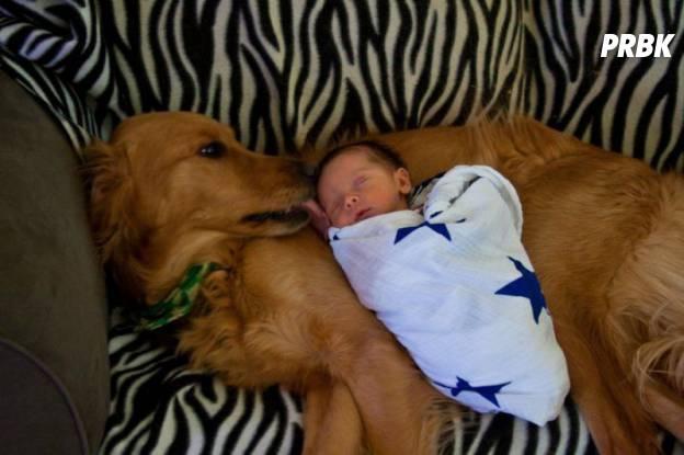 Bébé avec animal 011