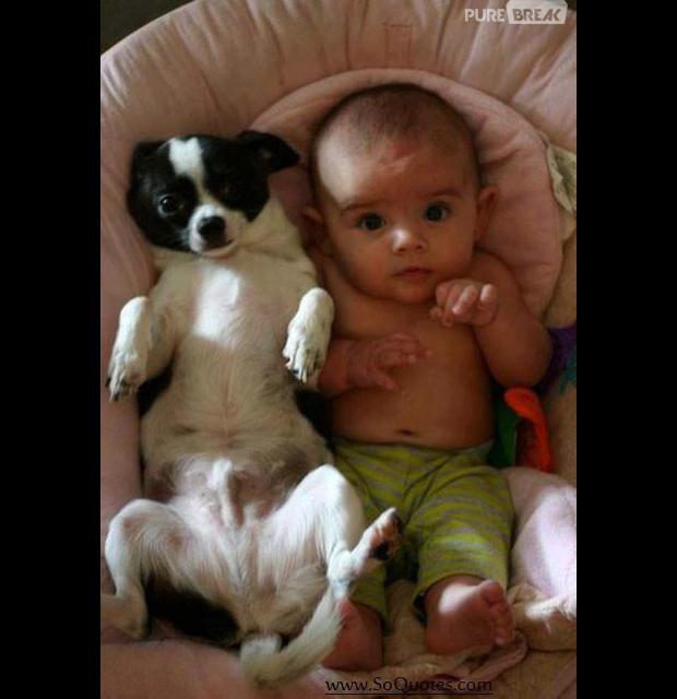 Les chiens Baby Sitters.. Magnifique... 316848-bebe-avec-animal-012-620x0-1