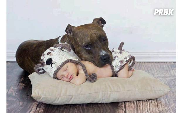 Bébé avec animal 015