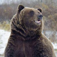 """Justin Bieber """"sauve"""" un pêcheur : son tube Baby fait fuir un ours"""