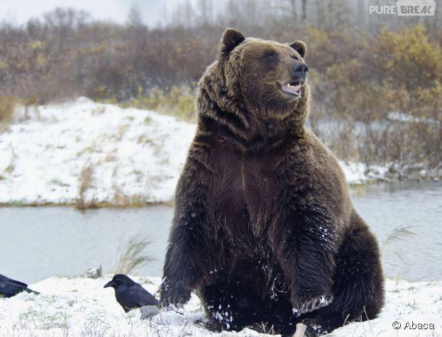 Insolite : un Russe affirme avoir été sauvé de l'attaque d'un ours... par Justin Bieber