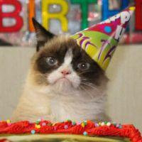 Journée mondiale du chat : 10 vidéos LOLcats qui vont vous faire miauler de rire
