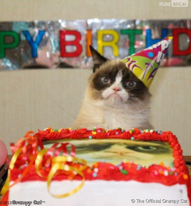 Journée internationale du chat  même Grumpy Cat fait la fête ou presque