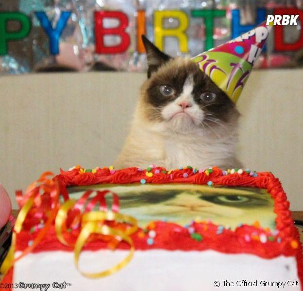 Journée internationale du chat : même Grumpy Cat fait la fête... ou presque