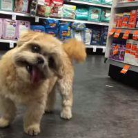 [VIDÉO] Découvrez l'incroyable histoire de Marnie, un chien pas comme les autres