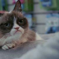 Grumpy Cat, le film : la bande-annonce en mode pas content