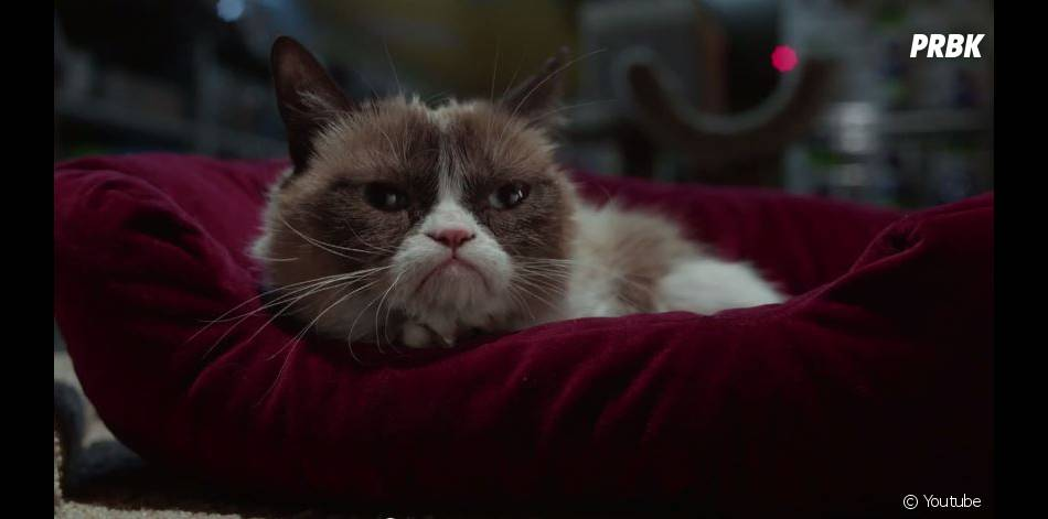 Grumpy Cat's Worst Christmas Ever, le trailer du film