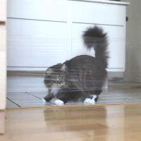 Rendre fou un chat avec du cellophane et un laser : le troll ultime