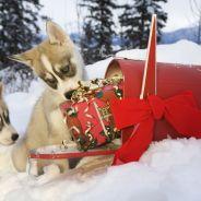 Noël 2014 : les cadeaux que personne ne veut sous le sapin