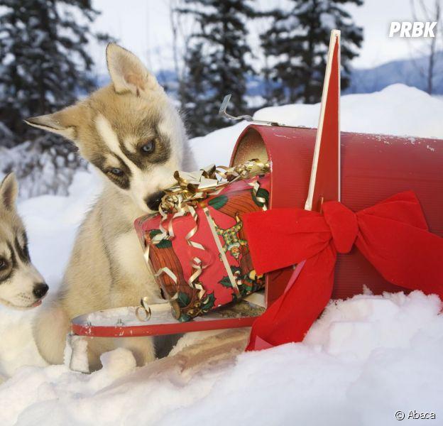 Noël 2014 : les cadeaux que les Français ne veulent pas sous le sapin