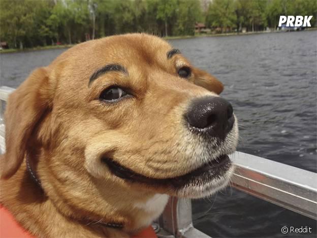 Un chien qui trolle avec ses sourcils dessinés