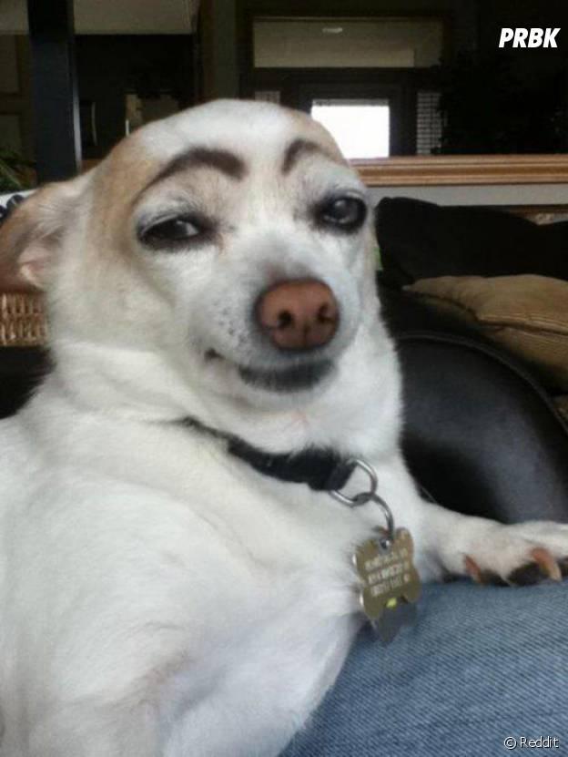 Un chien qui trolle avec ses faux sourcils et sa tête à la Jean Dujardin
