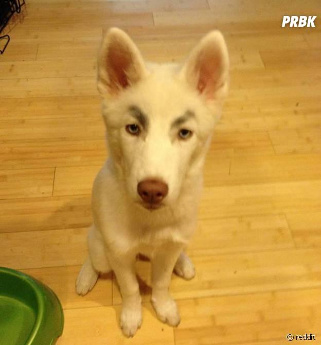 Un chien qui trolle avec ses faux sourcils