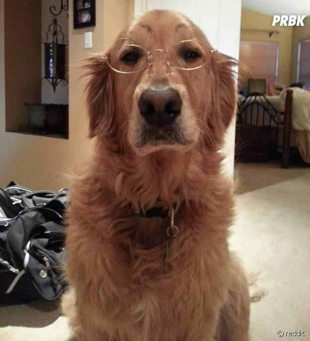 Un chien qui trolle avec ses faux sourcils et des lunettes