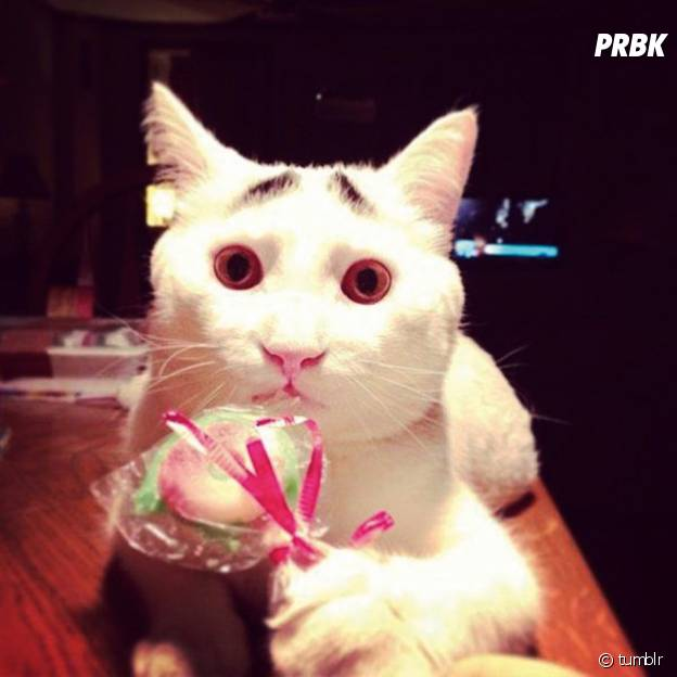 Un chat blanc avec de faux sourcils