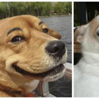 Drôle et cute : ces chiens avec des faux sourcils sont adorables