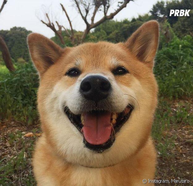 Marutaro : ce chien a le deuxième compte Instagram le plus suivi du Japon