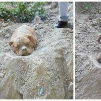 Athéna, la chienne abandonnée enterrée vivante, va mieux et a retrouvé une famille aimante
