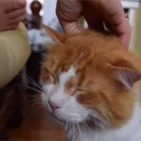 Trop cute : Tribble, le chat au ronronnement d'extraterrestre qui va vous faire craquer !