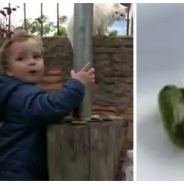 WTF : un bébé attrape et mange un serpent venimeux vivant !