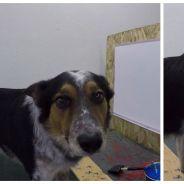 Énorme : ce chien arrive à écrire son propre nom ! (VIDEO)
