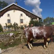 L'amour est dans le pré 2016 : Jean-Paul lave sa vache au karcher, avant/après bluffant pour Benoît