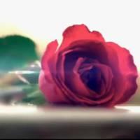 Le Bachelor 2016 : pourquoi une prétendante a-t-elle été floutée ? NT1 nous répond