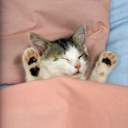 Recevoir une prime au boulot pour avoir bien dormi, c'est possible avec cette entreprise