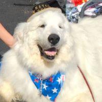 Insolite : un chien élu maire aux Etats-Unis... pour la seconde fois