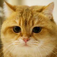 Trop caresser son chat peut vous tuer, et ce n'est pas une blague 🙀