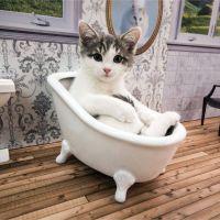 Une télé-réalité 100% cute avec des chatons dispo sur le web : l'idée de génie venue d'Islande