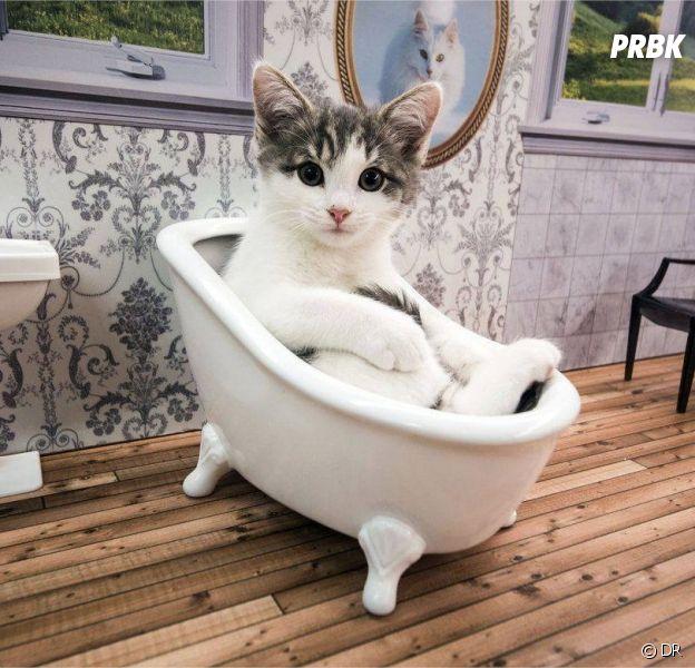La télé-réalité avec des chats séduit les internautes