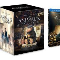 Les Animaux Fantastiques enfin disponible en DVD et Blu-ray