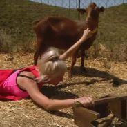 Jessica (Les Marseillais) traînée au sol par une chèvre : sa réaction hilarante sur Twitter 😂