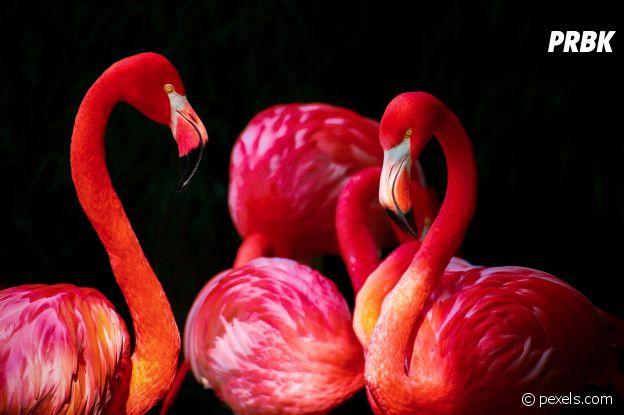 Jobs d'été trop cool : chef des flamants roses aux Bahamas.