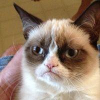 Grumpy Cat, Disaster Girl, Doge... que sont devenus les stars des mèmes mythiques ?