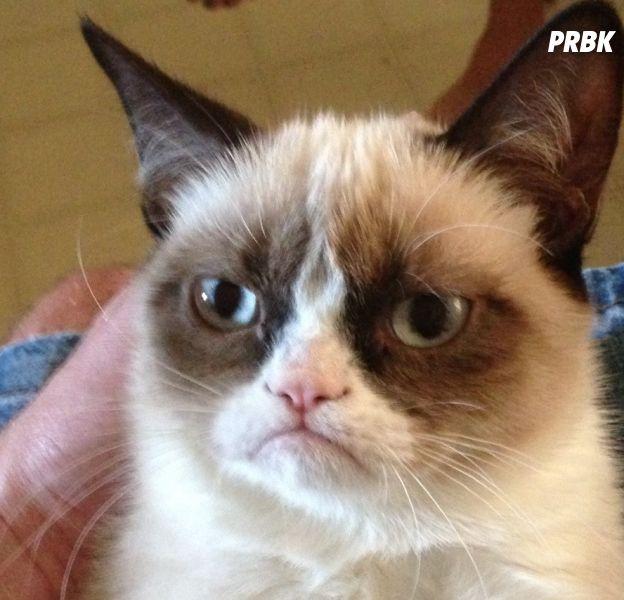 Grumpy Cat, Disaster Girl, Doge... que sont devenus les stars de memes ?