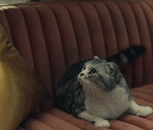 Taylor Swift invite ses chats dans son clip