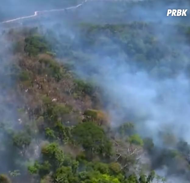 L'Amazonie ravagée par des feux de forêt violents, les internautes pleurent