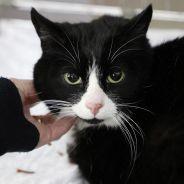 Confinement : les adoptions d'animaux en refuge autorisées à partir de la semaine prochaine