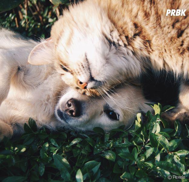 La vente des chiens et chats en animaleries sera interdite à partir de 2024