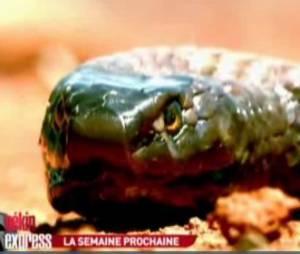Quatorze des vingt serpents les plus venimeux au monde se trouvent dans le bush australien