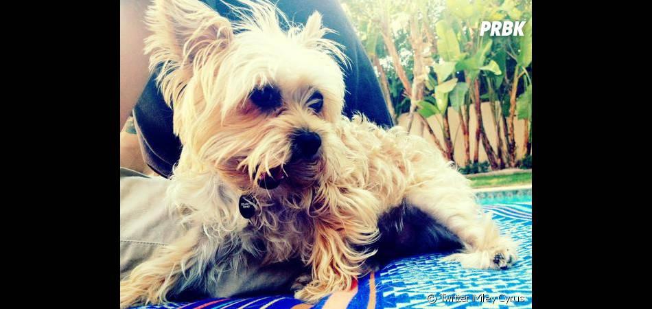 Lila est décédée à seulement deux ans !