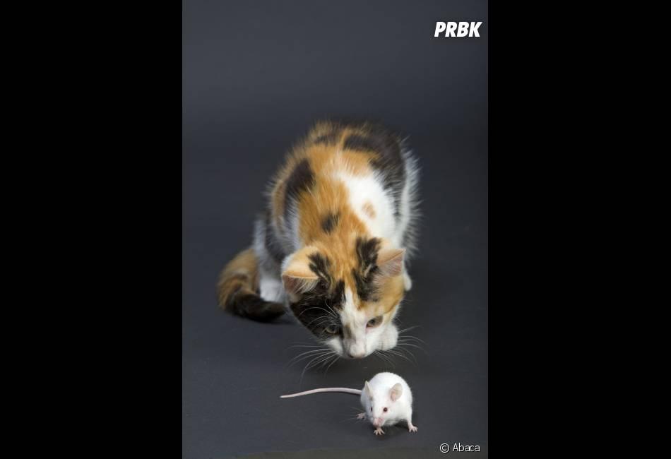 Un Parisien a découvert une souris dans ses légumes