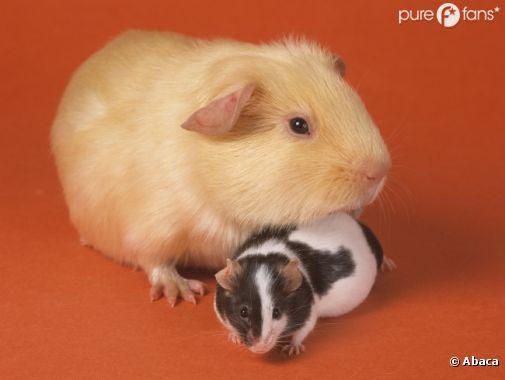 Les souris s'incrustent dans conserves
