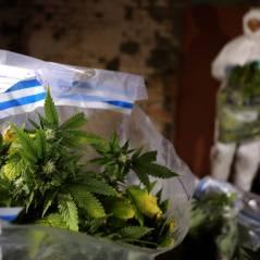 """Cannabis Social Club : le """"peuple de l'herbe"""" sort des placards"""