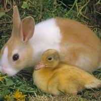 Pâques : Depuis quand les lapins savent cacher des oeufs en chocolat ?