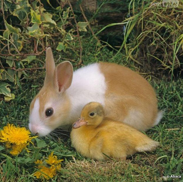 En France, la tradition de Pâques veut que les lapins cachent des oeufs en chocolat