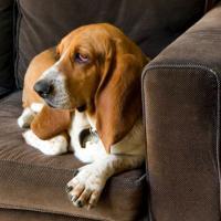 Etats-Unis : une chaîne de télé... pour les chiens